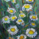 "CHADWICK, PHIL - ""A Daisy A Day"" Oil on Indian red oil tinted foundation on commercial canvas - 14x11 - I try to paint a daisy every year but I did not know enough about them until now. The reference books tell me Leucanthemum vulgare,ox-eye daisy or oxeye daisy is a widespread flower."