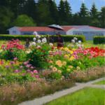 "O'Leary, Kathy        "" Dalia Garden ""                        -- oil painting"